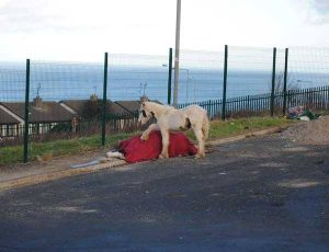 The foal made headlines around the world after a picture showing him stood over his dead mother was posted on WicklowNews.net. (Pic: Roxanne Luke)