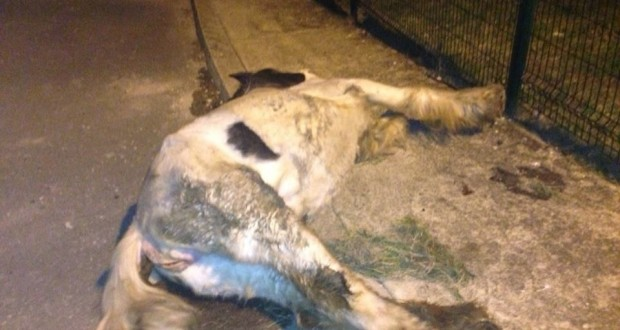 Horse beaten to death in Wicklow Town