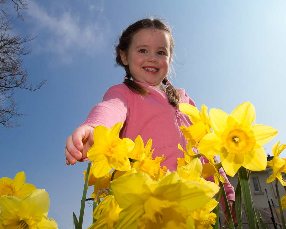 Ruby Tracey picks a daffodil during Daffodil day for Irish cancer support in Arklow