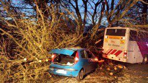 A tree falls on a school bus in Wexford (pic An Garda Siochana)